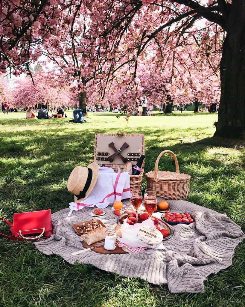 Taman Sakura di Kebun Raya Cibodas tempat wisata di bogor 2