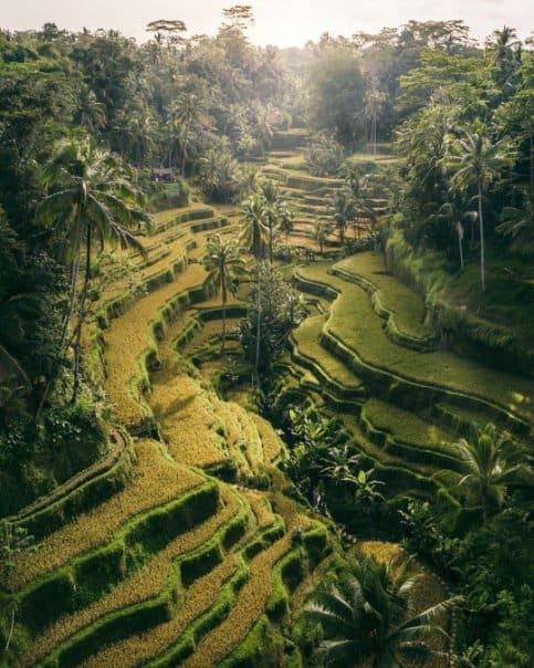 tempat wisata di bali ubud bali