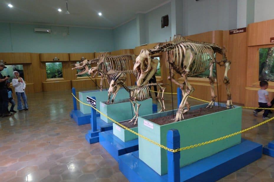 tempat wisata di bogor Museum Zoologi