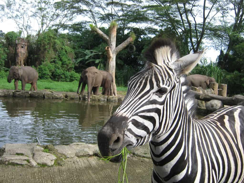 tempat wisata di bogor Taman Safari Bogor 2