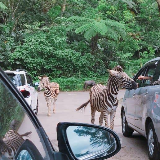 tempat wisata di bogor Taman Safari Bogor
