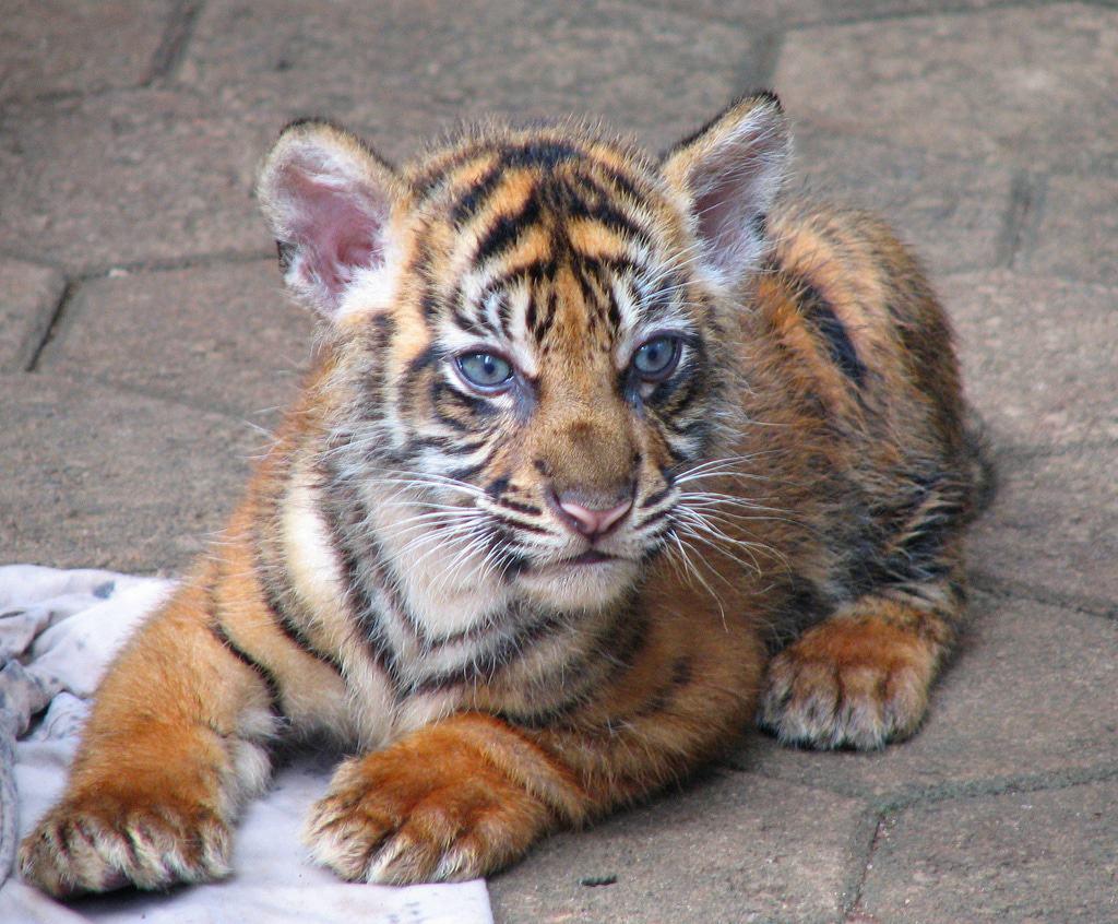 tempat wisata di jakarta kebun binatang ragunan (2)