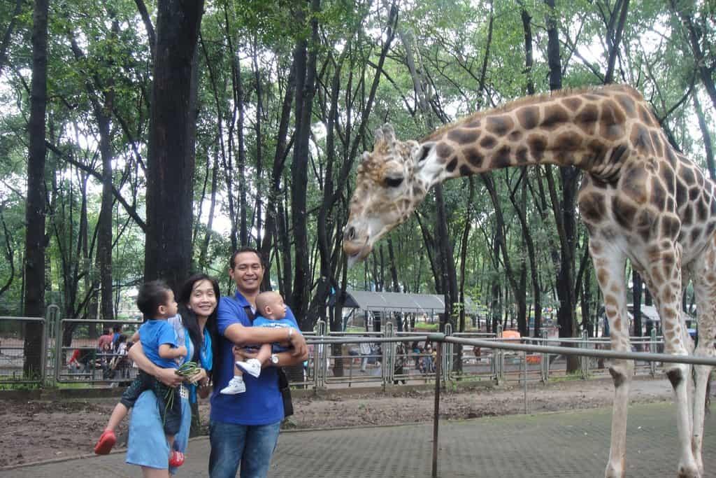 tempat wisata di jakarta kebun binatang ragunan
