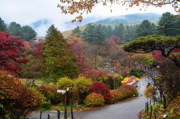 tempat wisata di korea selatan the garden of the morning calm 3