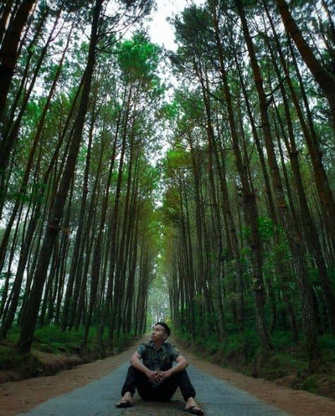 tempat wisata di magelang Hutan Pinus Grenden