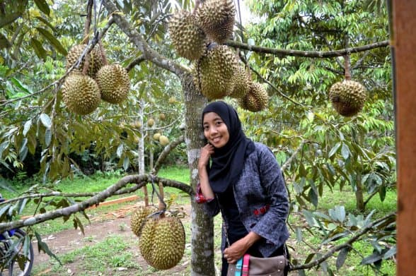 tempat wisata di magelang Sentra Kebun Durian Candimulyo