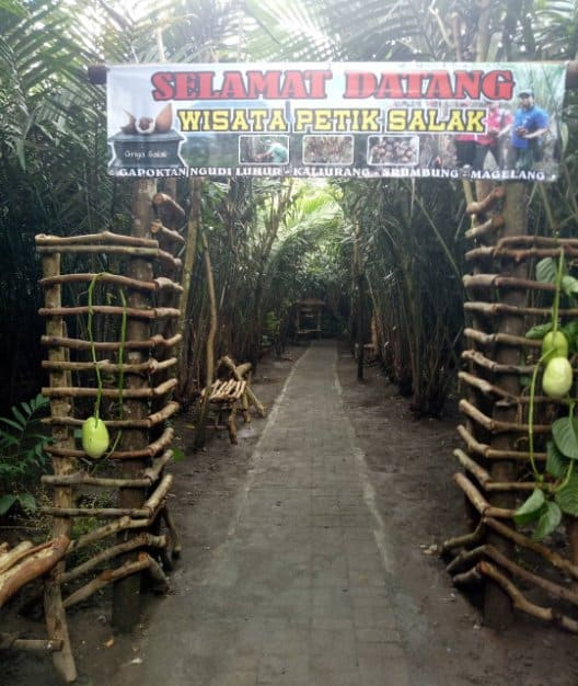 tempat wisata di magelang Wisata Petik Salak Gapoktan Ngudi Luhur