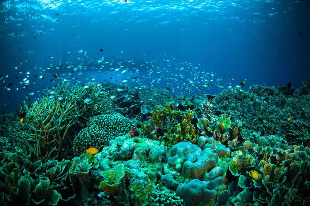 gambar pemandangan indah Taman Laut Bunaken 2