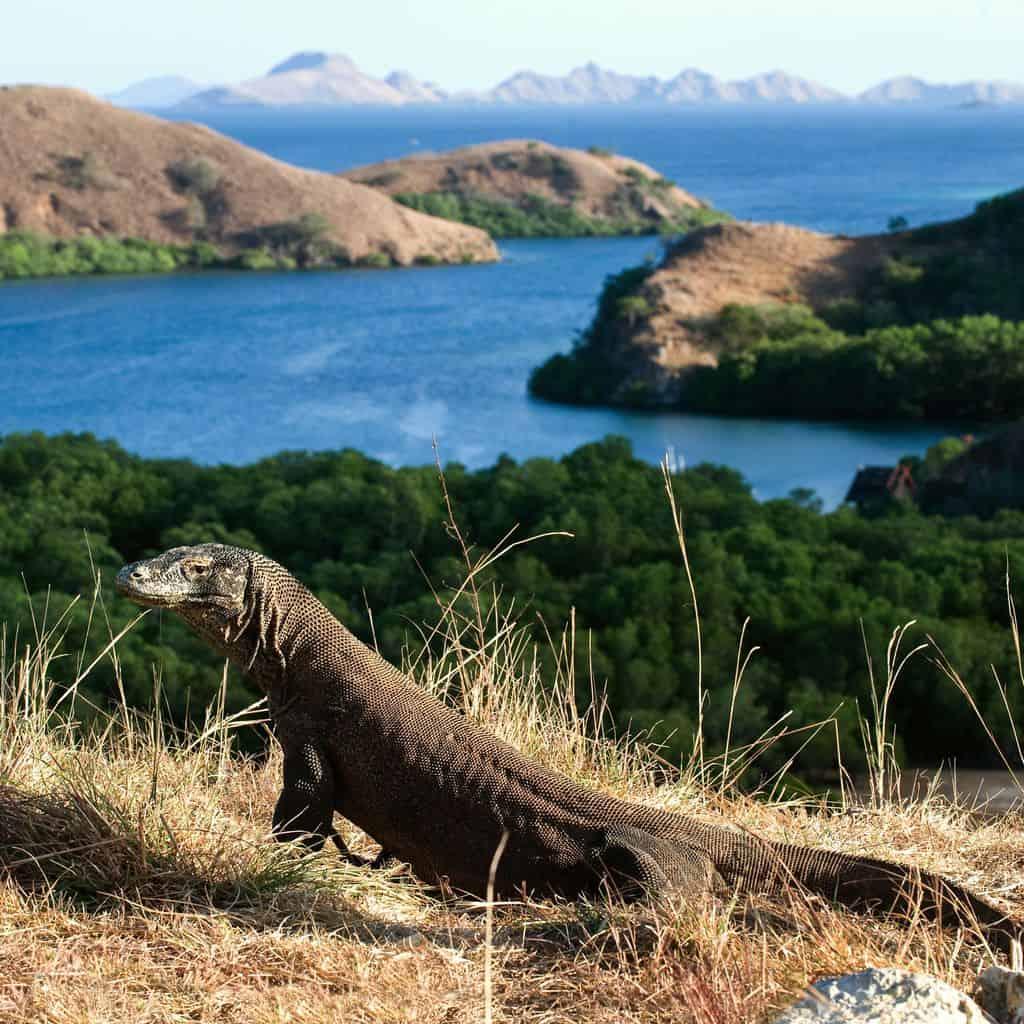 gambar pemandangan indah Taman Nasional Komodo