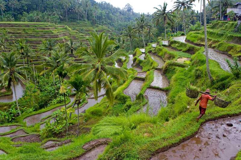 gambar pemandangan indah Ubud