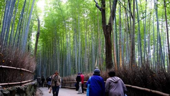 tempat wisata di surabaya Hutan Bambu Keputih