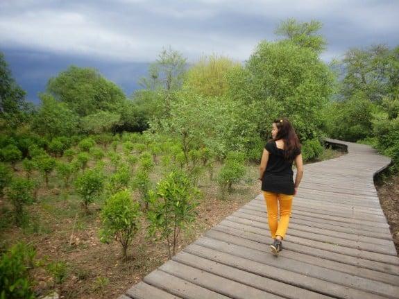tempat wisata di surabaya Hutan Mangrove Gunung Anyar