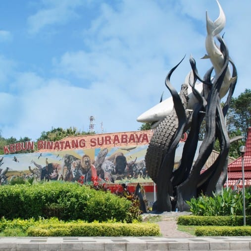 tempat wisata di surabaya Kebun Binatang Surabaya