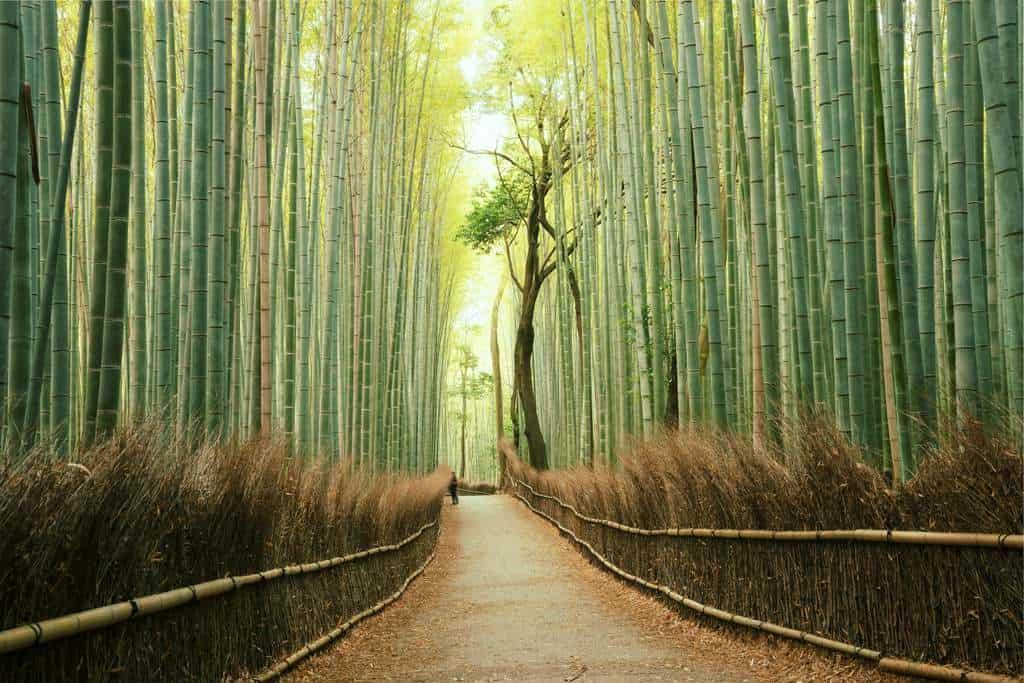 gambar pemandangan indah di luar negeri Arashiyama Bamboo Grove Japan