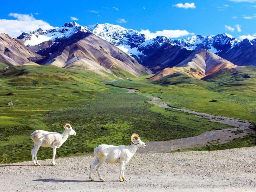 gambar pemandangan indah di luar negeri Taman Nasional Denali Amerika Serikat